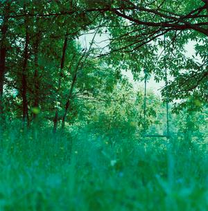 緑の草木と枝にぶらさがるブランコの写真素材 [FYI03869290]