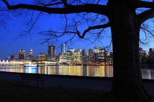 スタンレーパークより望むウォータフロントのビル群の夜景の写真素材 [FYI03871239]
