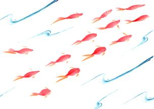金魚のイラスト素材 [FYI03871625]