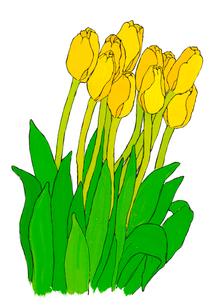 黄色いチューリップのイラスト素材 [FYI03871631]