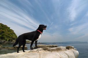 磯辺の岩に立つ犬の写真素材 [FYI03871699]