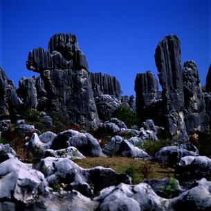 石林の写真素材 [FYI03871988]