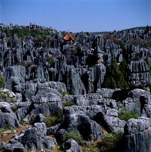 石林の写真素材 [FYI03871991]