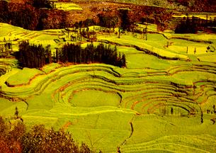 羅平 菜の花畑の写真素材 [FYI03872049]