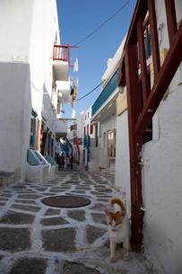 旧市街と猫の写真素材 [FYI03872095]