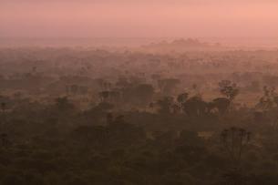 朝靄のサバンナの写真素材 [FYI03872109]