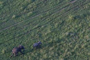 気球から象の親子を眺めるの写真素材 [FYI03872116]