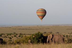 象の上空を舞う気球の写真素材 [FYI03872119]