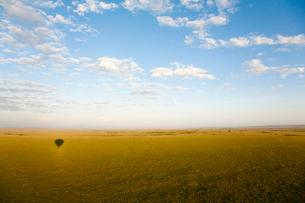 気球から見た広大なサバンナの写真素材 [FYI03872126]