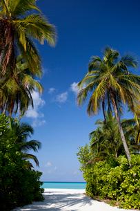 緑豊かな島と海の写真素材 [FYI03872146]