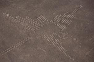 ハチドリの地上絵の写真素材 [FYI03872176]