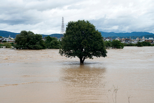 台風で増水した桂川の写真素材 [FYI03873086]