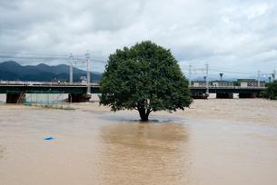 台風で増水した桂川に架かる鉄橋の写真素材 [FYI03873092]