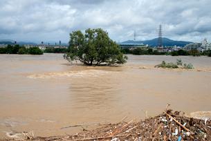 台風で増水した桂川の写真素材 [FYI03873093]
