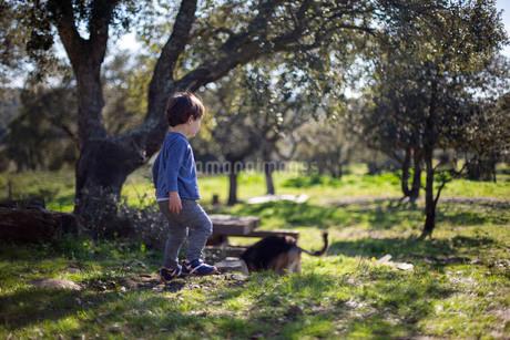 木漏れ日が差し込む木々の間で遊ぶ幼児と犬の写真素材 [FYI03873456]