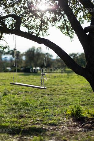 木の枝にぶら下がるロープブランコの写真素材 [FYI03875453]