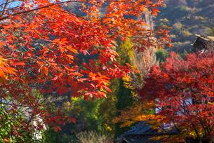 由布院の紅葉の写真素材 [FYI03876061]