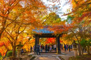 福岡県 秋月城跡 黒門の写真素材 [FYI03876108]