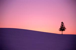夕暮れの丘に立つ1本の木の写真素材 [FYI03876215]