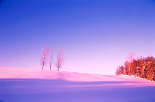 夕暮れの雪の丘に立つ木と霧氷の写真素材 [FYI03876216]