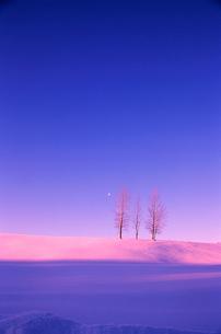 夕暮れの雪の丘に立つ木の写真素材 [FYI03876218]