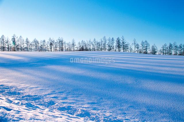 雪原と並木の写真素材 [FYI03876234]