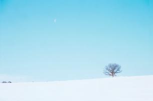 雪原と一本の木の写真素材 [FYI03876235]