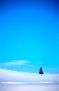 雪原と一本の木の写真素材 [FYI03876248]