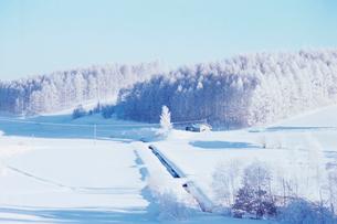 雪原と雪の積もった林の写真素材 [FYI03876260]