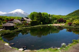 忍野の湧水群と富士山の写真素材 [FYI03876313]