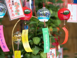 浅草 ほおずき市の写真素材 [FYI03876589]