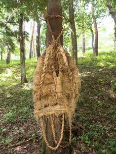 富津市関尻の綱吊りの写真素材 [FYI03876671]
