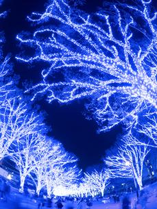代々木公園のイルミネーション 青の洞窟SHIBUYAの写真素材 [FYI03876775]
