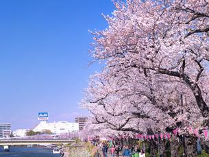 桜が満開の隅田公園の写真素材 [FYI03876837]