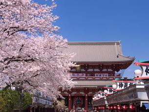 満開の桜と浅草寺の写真素材 [FYI03876848]