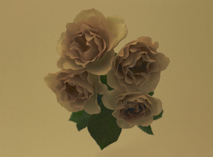 薔薇 グレイパールの写真素材 [FYI03876989]