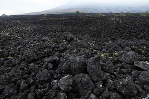 岩手県 焼走り溶岩流の岩海の写真素材 [FYI03877028]