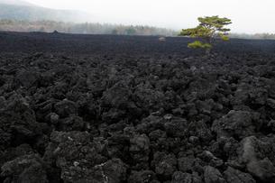 岩手県 焼走り溶岩流の岩海の写真素材 [FYI03877044]