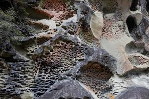 和歌山県 高池の虫喰岩 -蜂の巣状風化の典型例-の写真素材 [FYI03877053]