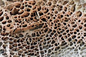 和歌山県 高池の虫喰岩 -蜂の巣状風化の典型例-の写真素材 [FYI03877055]