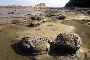 島根県 石見畳ヶ浦のノジュール(団塊) -浜田地震によって隆起した波食棚-の写真素材 [FYI03877061]