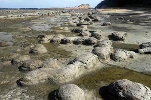 島根県 石見畳ヶ浦のノジュール(団塊) -浜田地震によって隆起した波食棚-の写真素材 [FYI03877065]