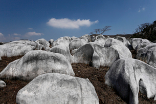 平尾台 日本三大カルストの一つの写真素材 [FYI03877112]