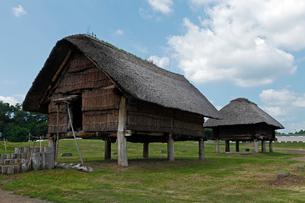 8月夏 三内丸山遺跡 日本最大の縄文遺跡の写真素材 [FYI03877154]