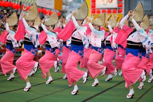 8月 本場徳島の阿波踊りの写真素材 [FYI03877206]