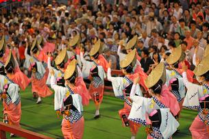 8月 本場徳島の阿波踊りの写真素材 [FYI03877209]