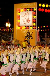 8月 本場徳島の阿波踊りの写真素材 [FYI03877215]