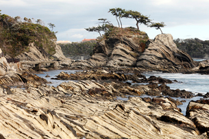 4月,三浦半島の荒崎海岸-美しい地層美の海岸の写真素材 [FYI03877235]