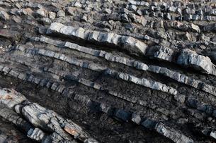 12月冬 砂岩と泥岩の重なりを示す地質露頭 紀伊半島の四万十層群の写真素材 [FYI03877243]