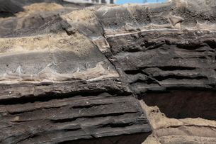 3月春 三浦半島城ヶ島の断層露頭の写真素材 [FYI03877244]